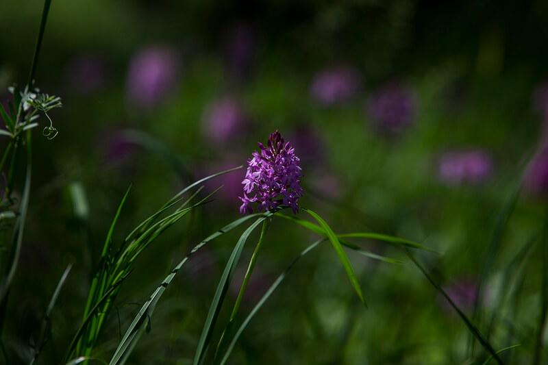 La nature à Montesquieu-Avantès (Ariège)